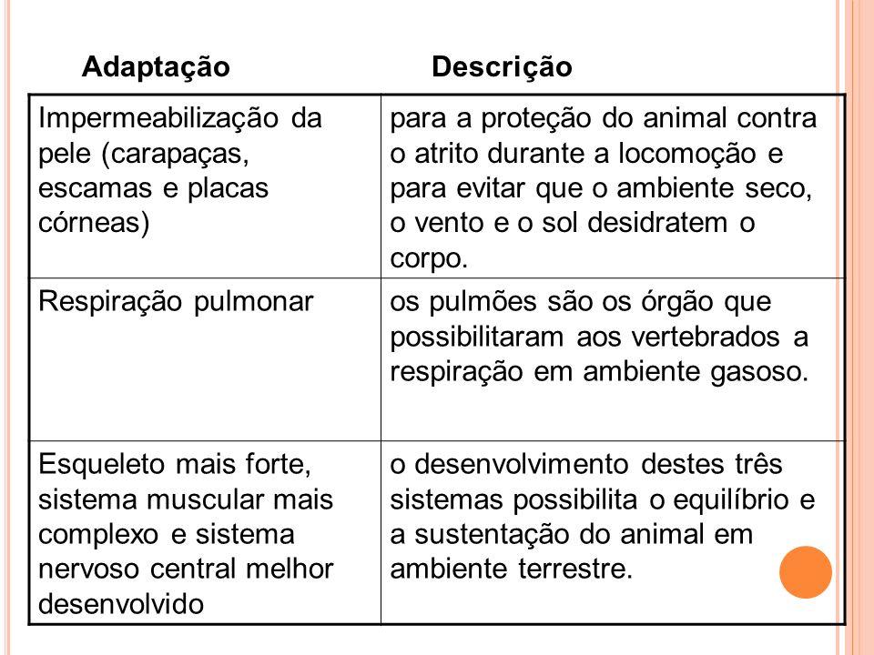 Adaptação Descrição Impermeabilização da pele (carapaças, escamas e placas córneas)