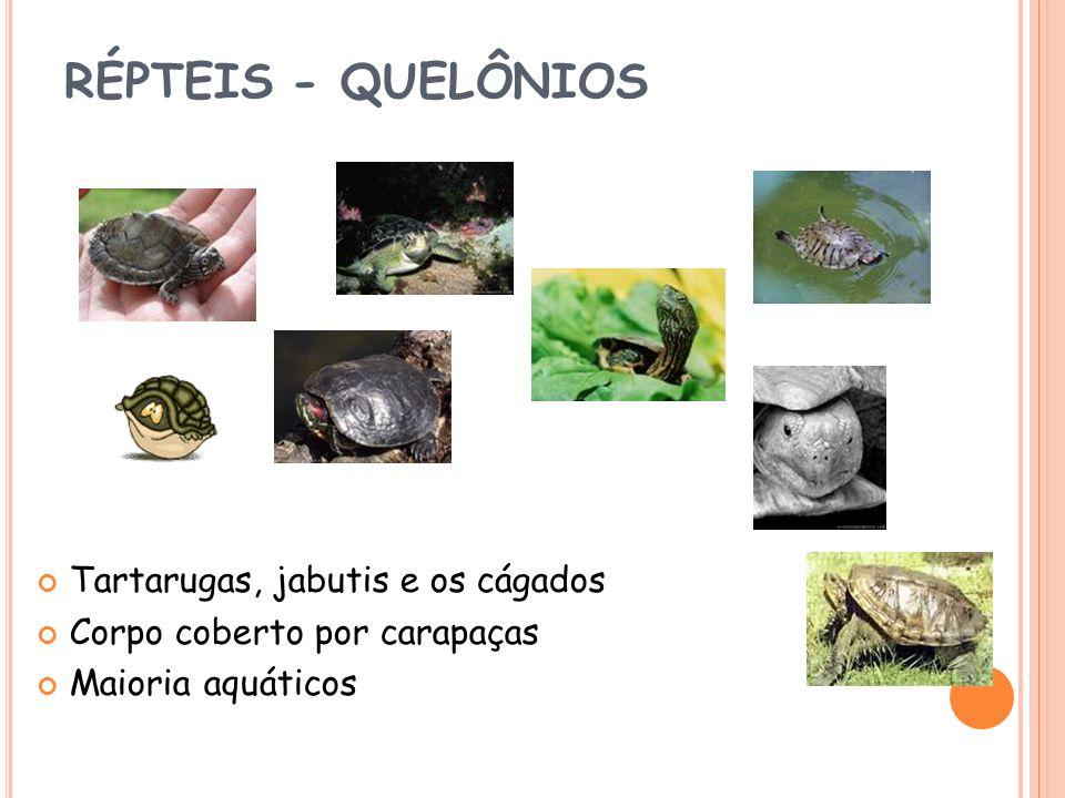 RÉPTEIS - QUELÔNIOS Tartarugas, jabutis e os cágados