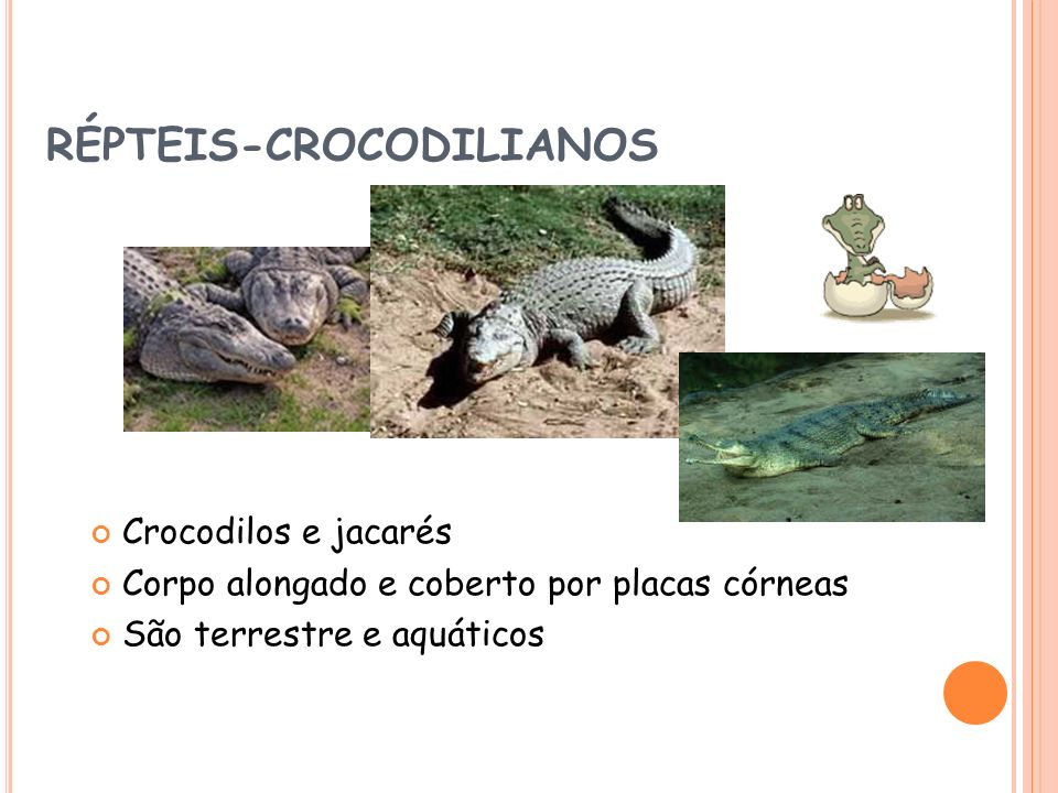 RÉPTEIS-CROCODILIANOS