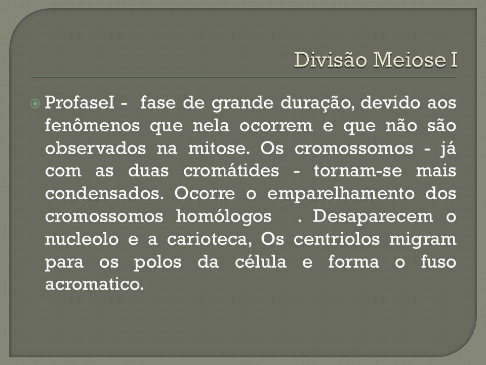Divisão Meiose I