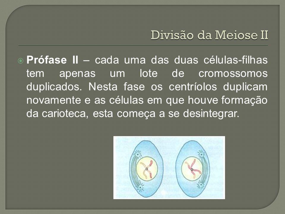 Divisão da Meiose II