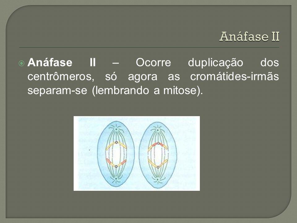 Anáfase II Anáfase II – Ocorre duplicação dos centrômeros, só agora as cromátides-irmãs separam-se (lembrando a mitose).