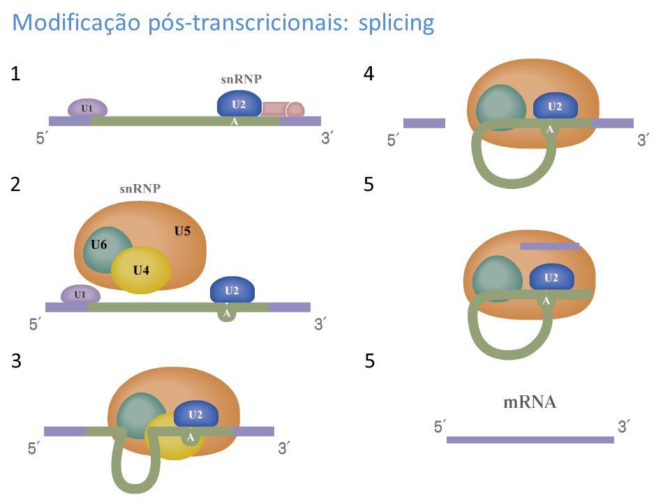 Modificação pós-transcricionais: splicing