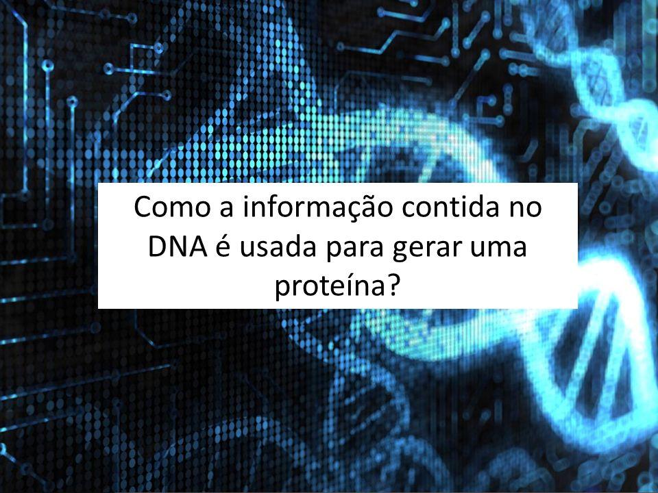 Como a informação contida no DNA é usada para gerar uma proteína