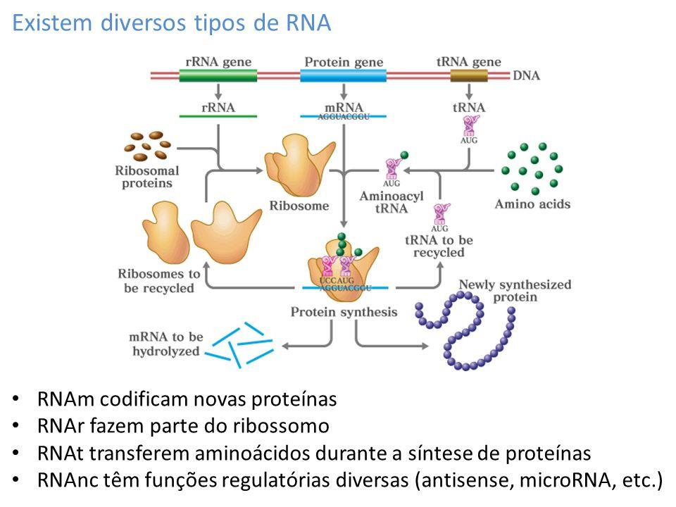 Existem diversos tipos de RNA