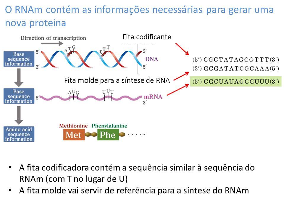 O RNAm contém as informações necessárias para gerar uma nova proteína