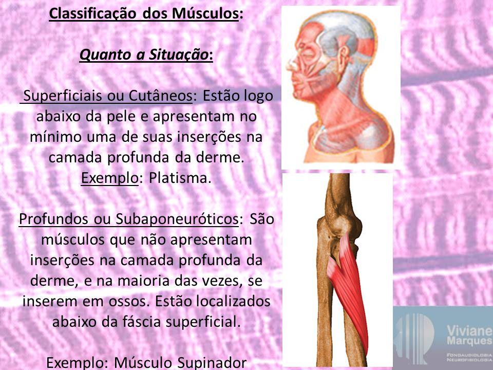 Classificação dos Músculos: Quanto a Situação: Superficiais ou Cutâneos: Estão logo abaixo da pele e apresentam no mínimo uma de suas inserções na camada profunda da derme. Exemplo: Platisma.
