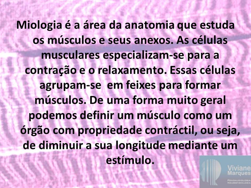 Miologia é a área da anatomia que estuda os músculos e seus anexos
