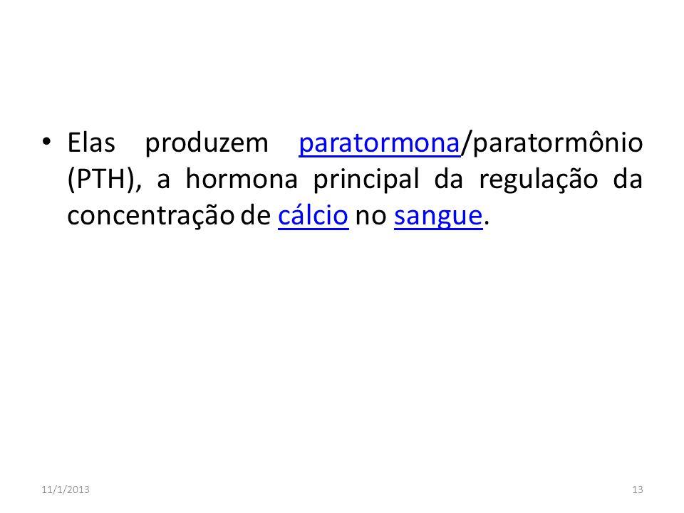 Elas produzem paratormona/paratormônio (PTH), a hormona principal da regulação da concentração de cálcio no sangue.