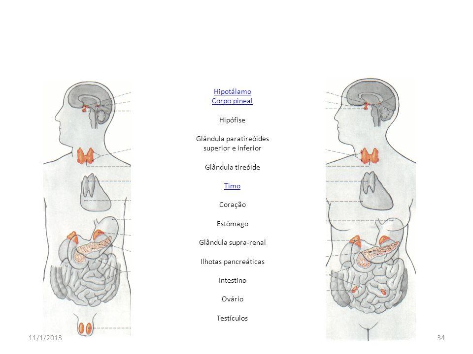 Glândula paratireóides