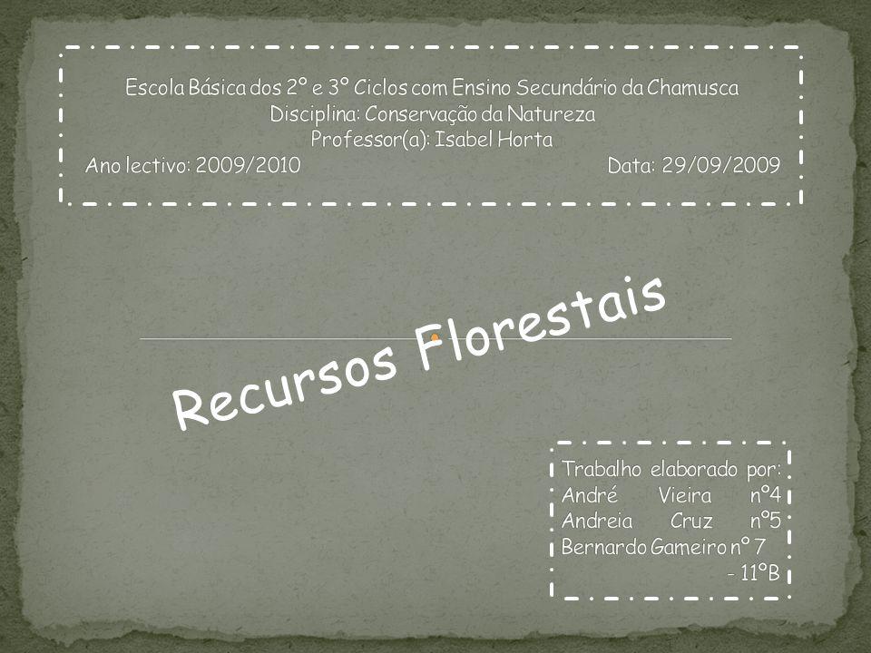 Escola Básica dos 2º e 3º Ciclos com Ensino Secundário da Chamusca Disciplina: Conservação da Natureza Professor(a): Isabel Horta Ano lectivo: 2009/2010 Data: 29/09/2009