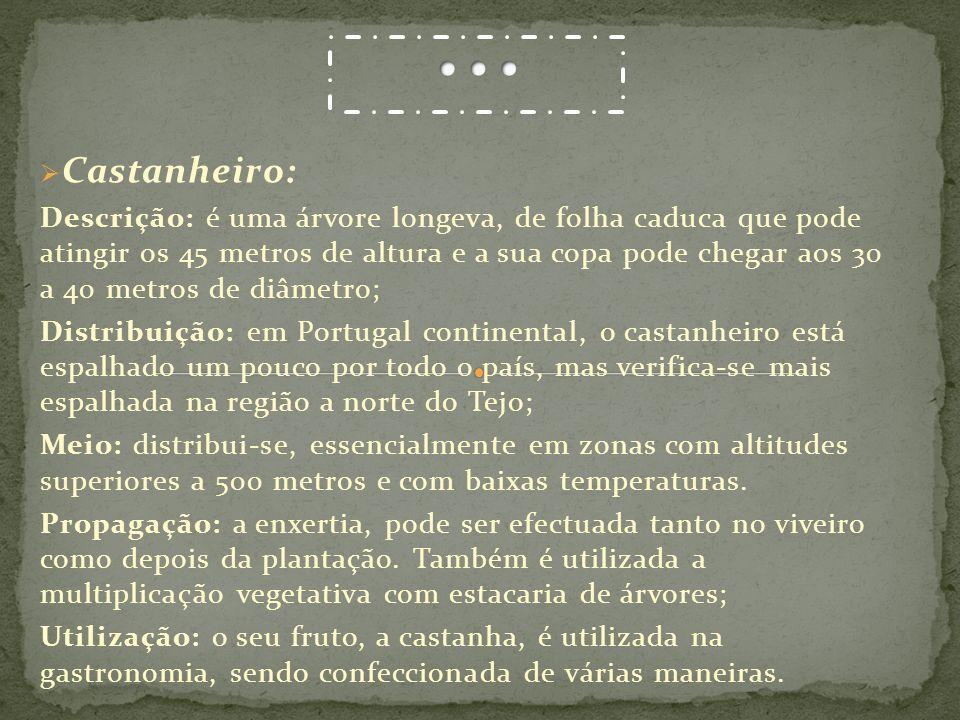 … Castanheiro: