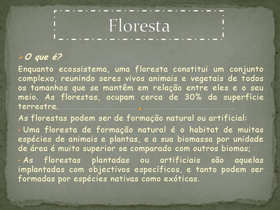 Floresta O que é