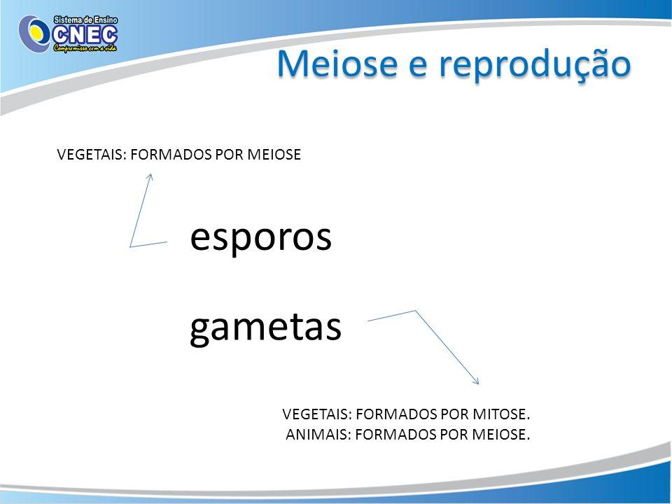 esporos gametas Meiose e reprodução VEGETAIS: FORMADOS POR MEIOSE