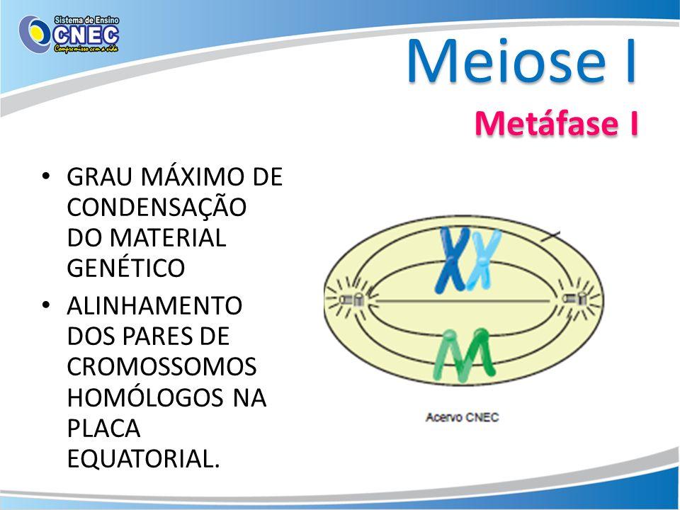 Meiose I Metáfase I GRAU MÁXIMO DE CONDENSAÇÃO DO MATERIAL GENÉTICO