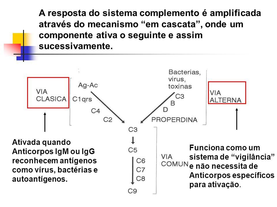 A resposta do sistema complemento é amplificada através do mecanismo em cascata , onde um componente ativa o seguinte e assim sucessivamente.