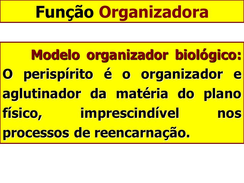 Função Organizadora
