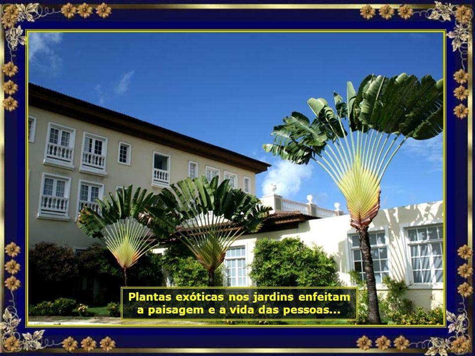 IMG_3694 - COSTA DO Sauípe - PLANTA EM LEQUE-690.jpg