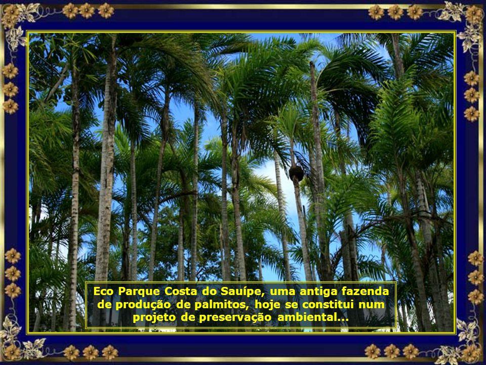 IMG_3167 - COSTA DO Sauípe - ECOPARQUE - PARQUE-690.jpg