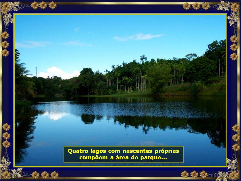 Quatro lagos com nascentes próprias compõem a área do parque...
