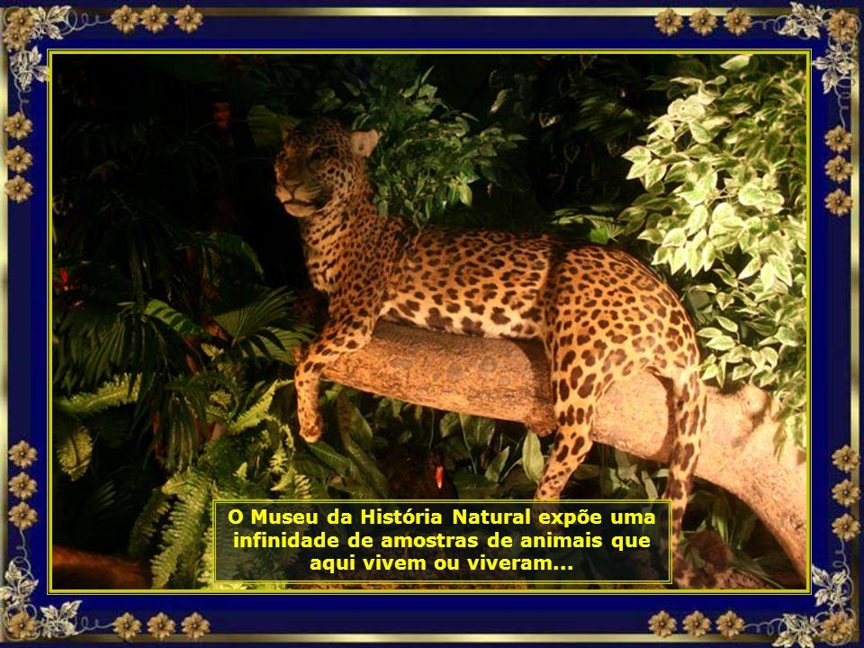 IMG_3085 - COSTA DO Sauípe - MUSEU DE HISTÓRIA NATURAL-690.jpg