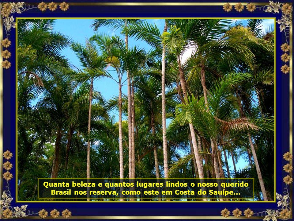 P0017277 - COSTA DO Sauípe - ECOPARQUE - PALMITOS-690