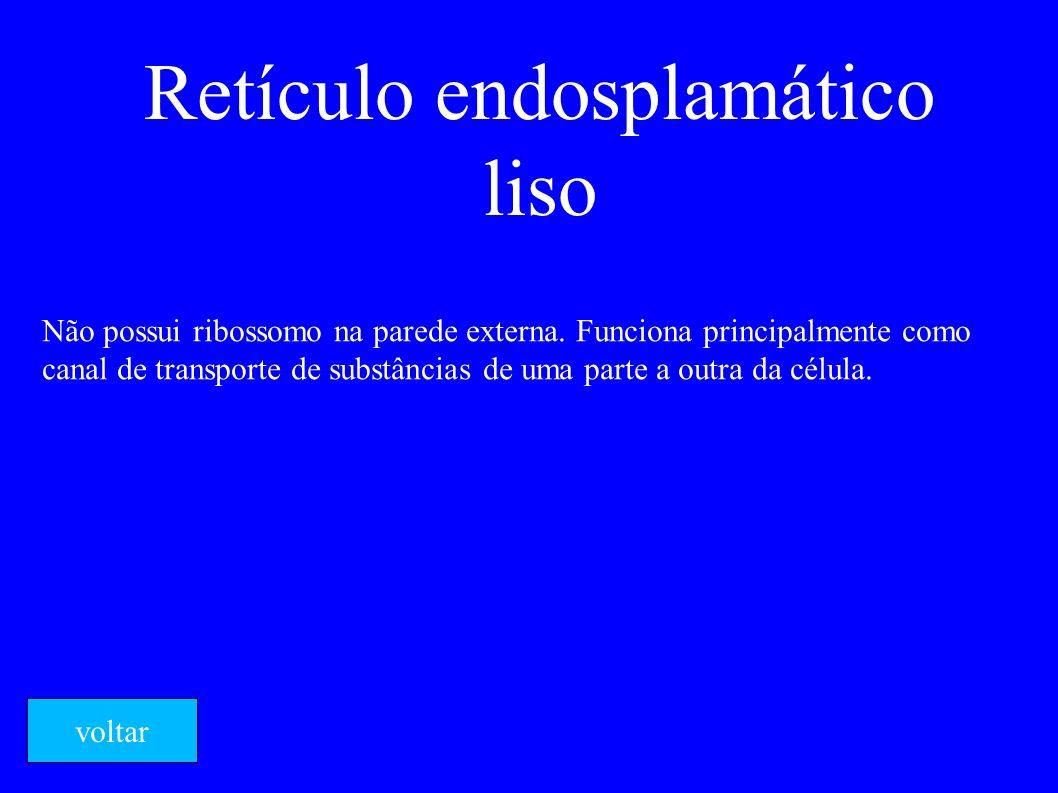 Retículo endosplamático liso