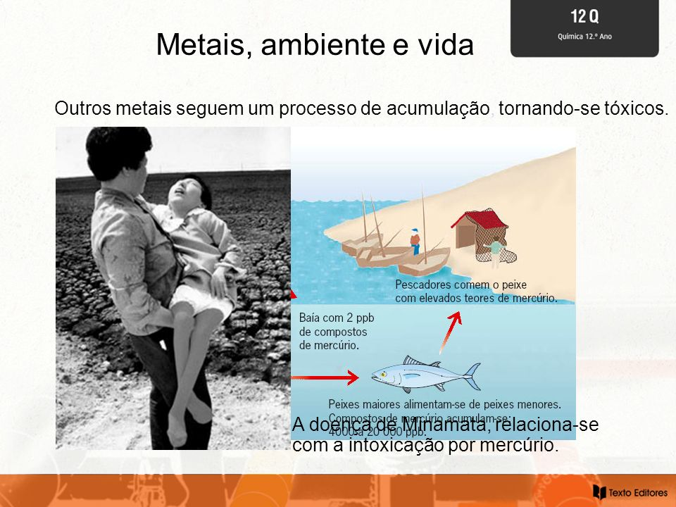 Metais, ambiente e vida Outros metais seguem um processo de acumulação, tornando-se tóxicos.