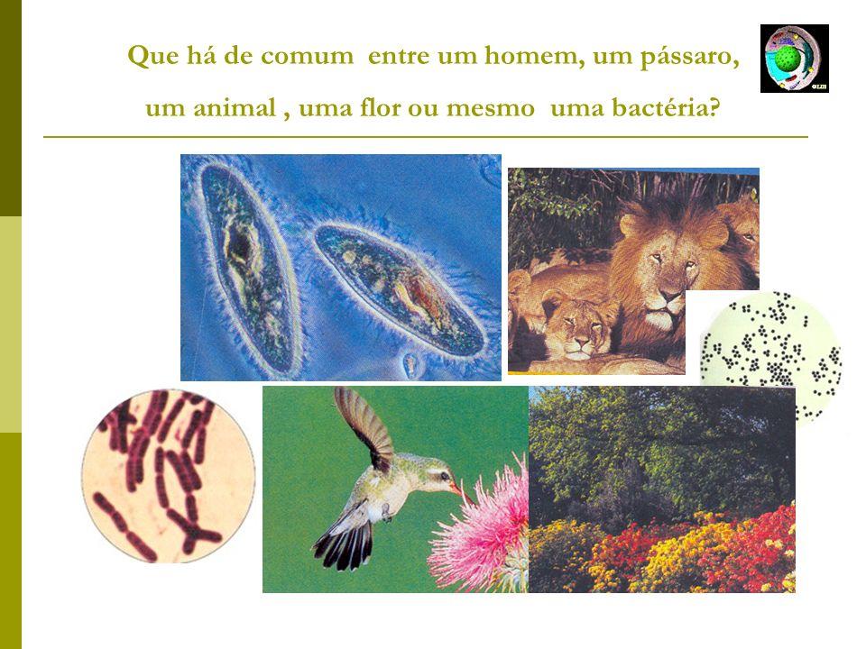Que há de comum entre um homem, um pássaro, um animal , uma flor ou mesmo uma bactéria