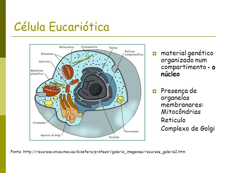 Célula Eucariótica material genético organizado num compartimento - o núcleo. Presença de organelos membranares: Mitocôndrias.