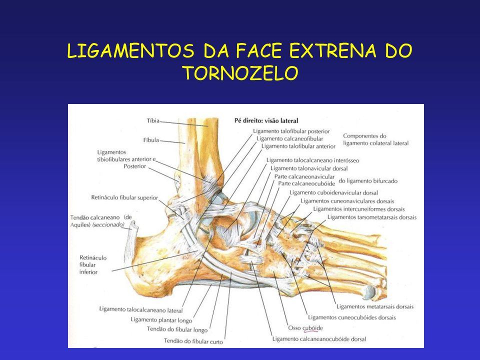 LIGAMENTOS DA FACE EXTRENA DO TORNOZELO