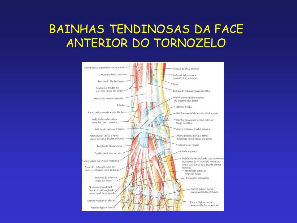 BAINHAS TENDINOSAS DA FACE ANTERIOR DO TORNOZELO