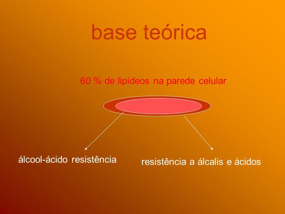 base teórica 60 % de lipídeos na parede celular