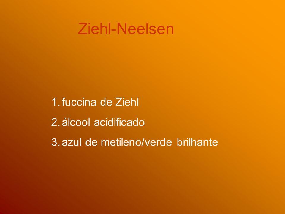 Ziehl-Neelsen fuccina de Ziehl álcool acidificado