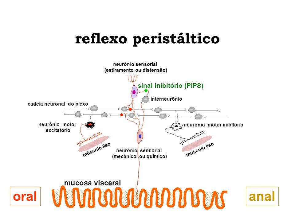 reflexo peristáltico oral anal mucosa visceral sinal inibitório (PIPS)
