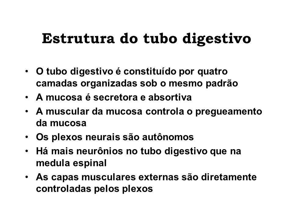 Estrutura do tubo digestivo