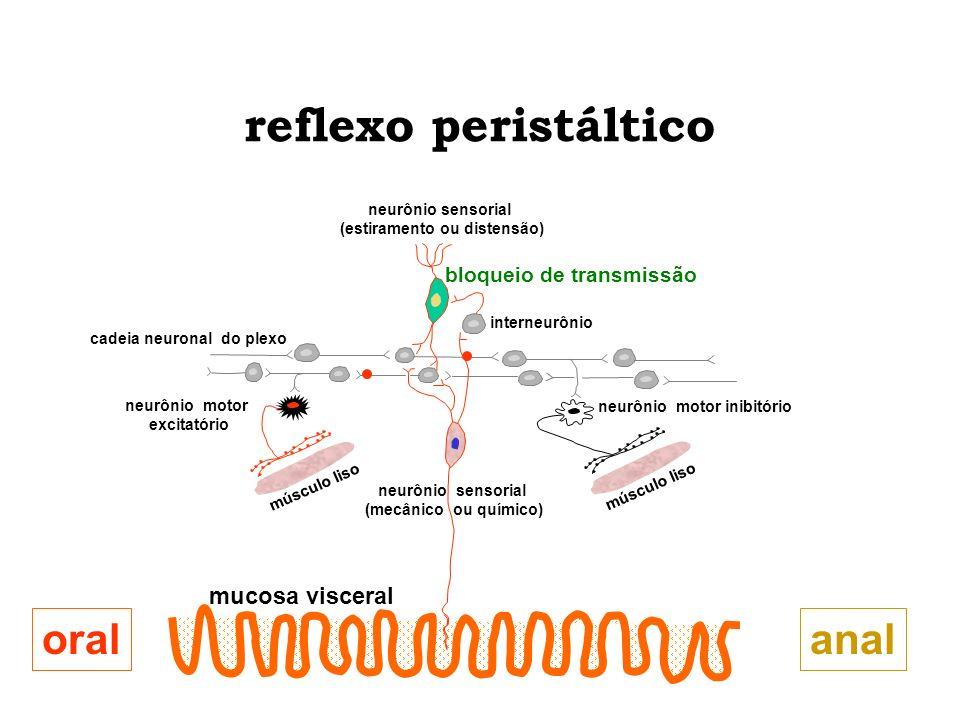 reflexo peristáltico oral anal mucosa visceral bloqueio de transmissão
