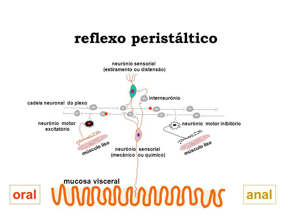 reflexo peristáltico oral anal mucosa visceral neurônio sensorial