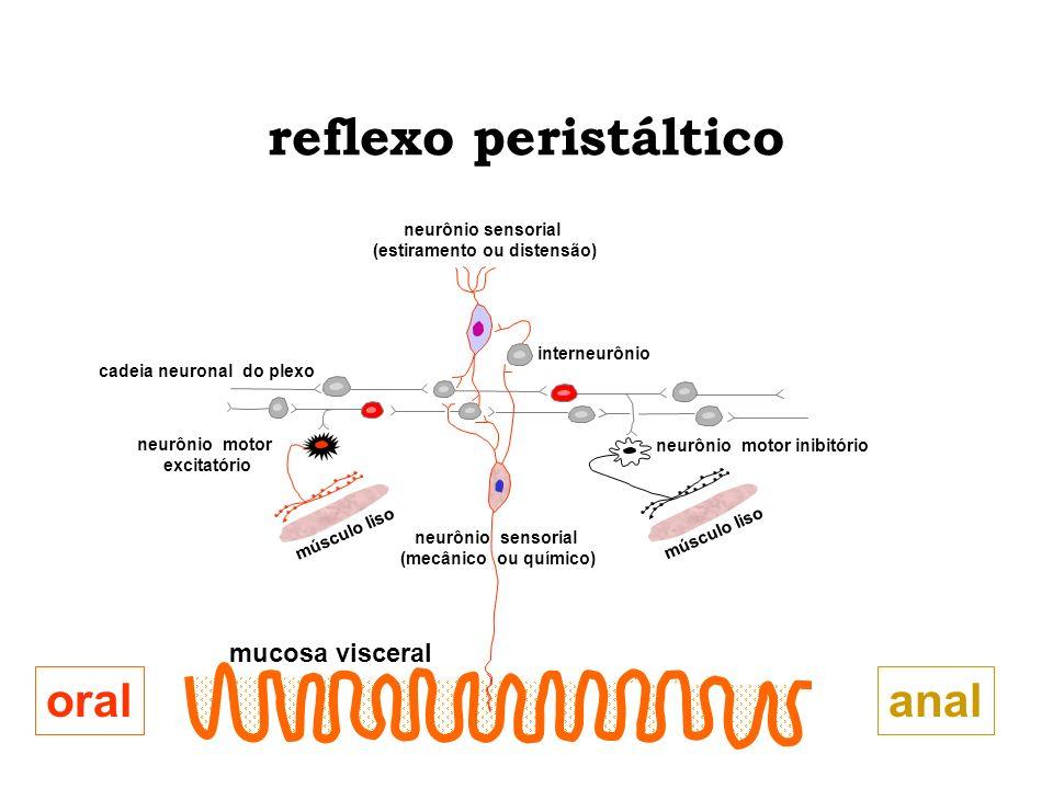 reflexo peristáltico anal oral mucosa visceral neurônio sensorial