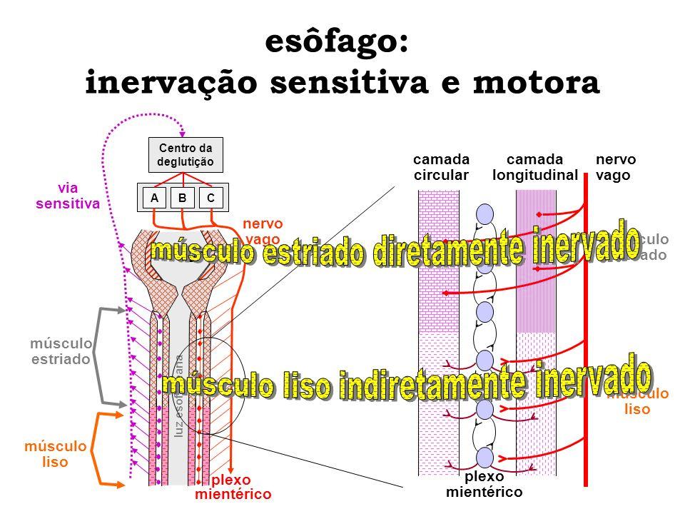esôfago: inervação sensitiva e motora