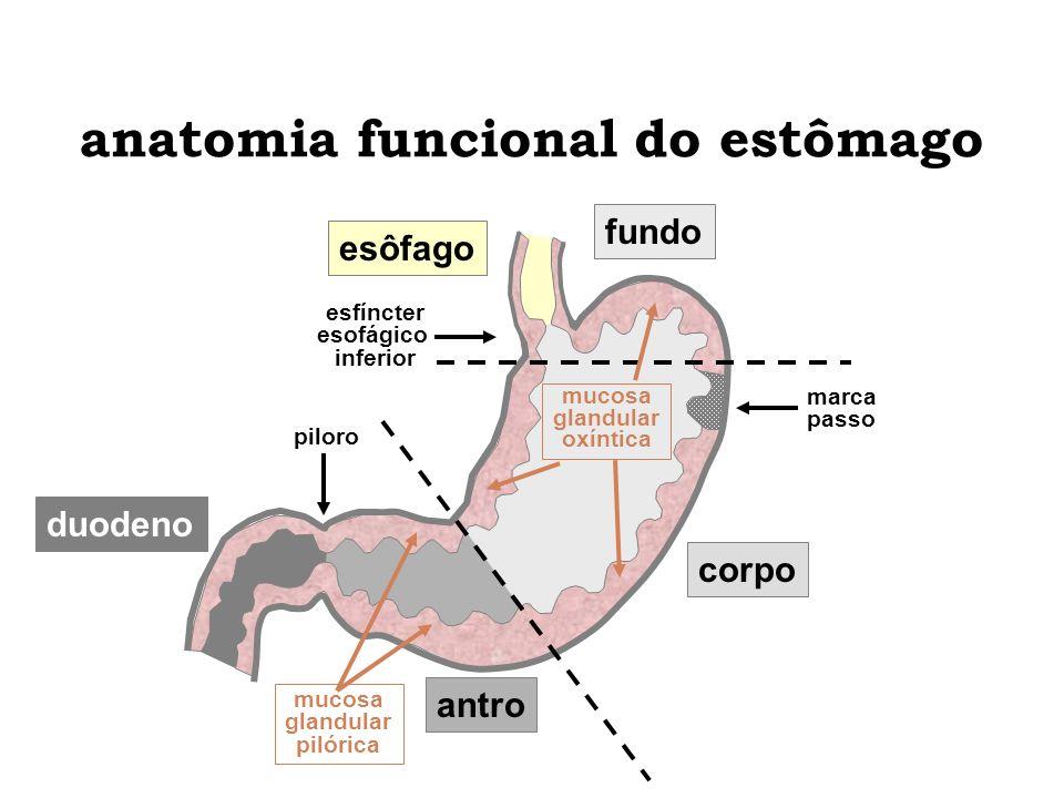 anatomia funcional do estômago