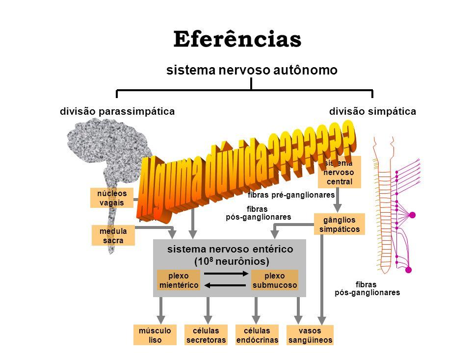 sistema nervoso entérico