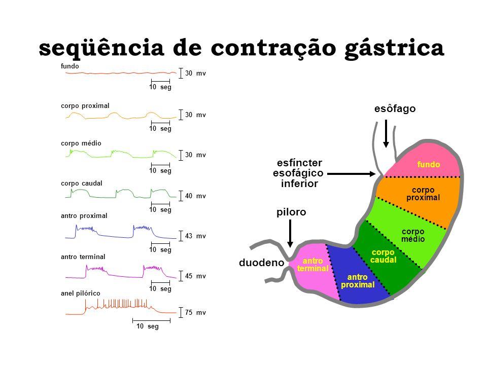 seqüência de contração gástrica