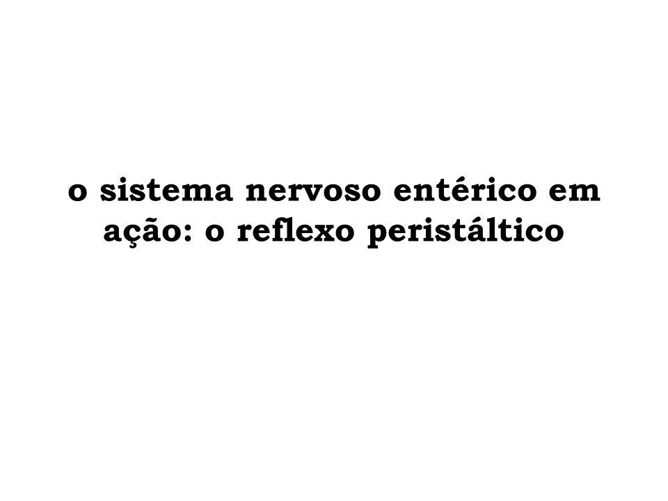 o sistema nervoso entérico em ação: o reflexo peristáltico