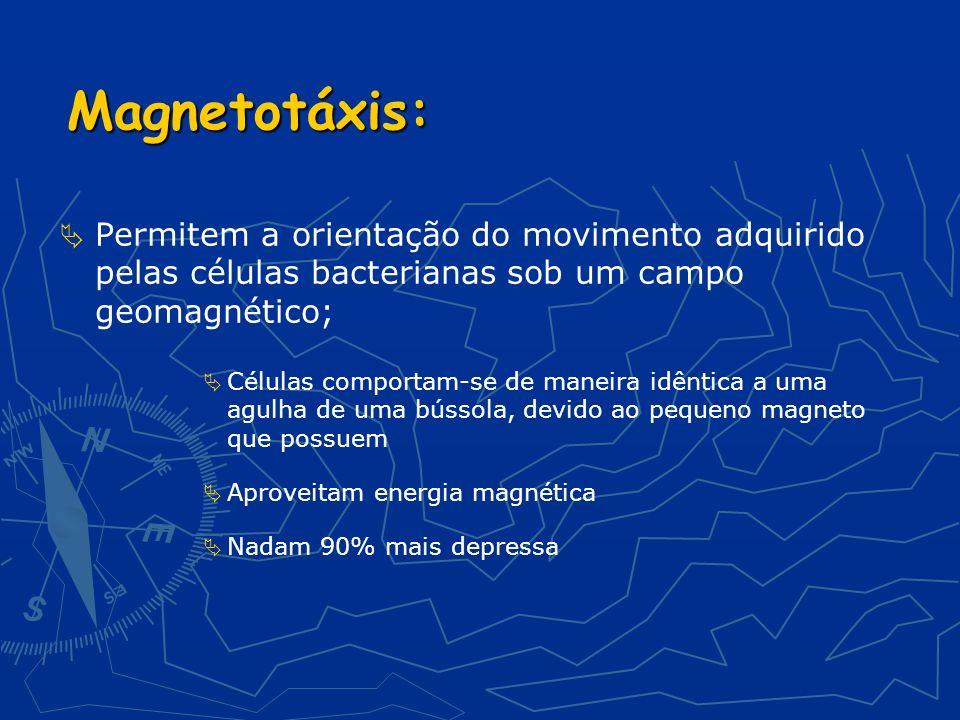 Magnetotáxis: Permitem a orientação do movimento adquirido pelas células bacterianas sob um campo geomagnético;