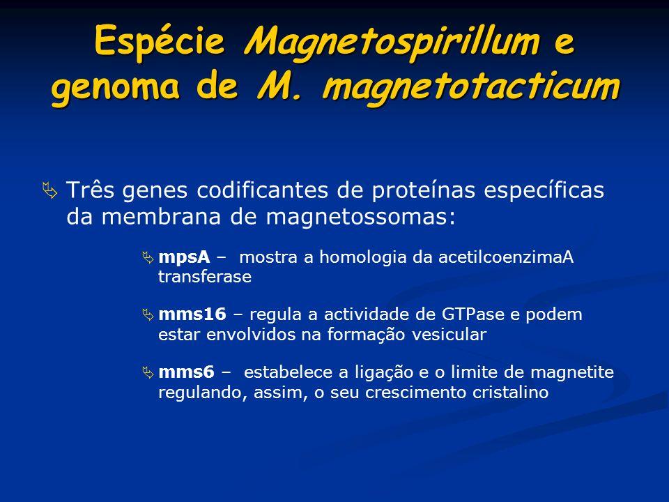 Espécie Magnetospirillum e genoma de M. magnetotacticum