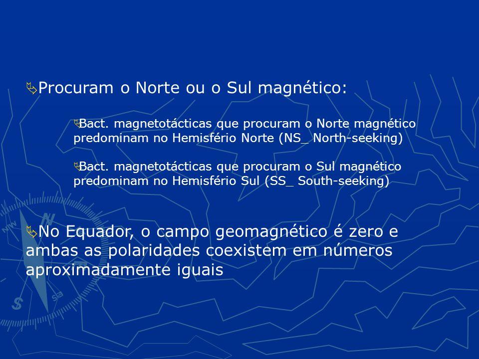 Procuram o Norte ou o Sul magnético: