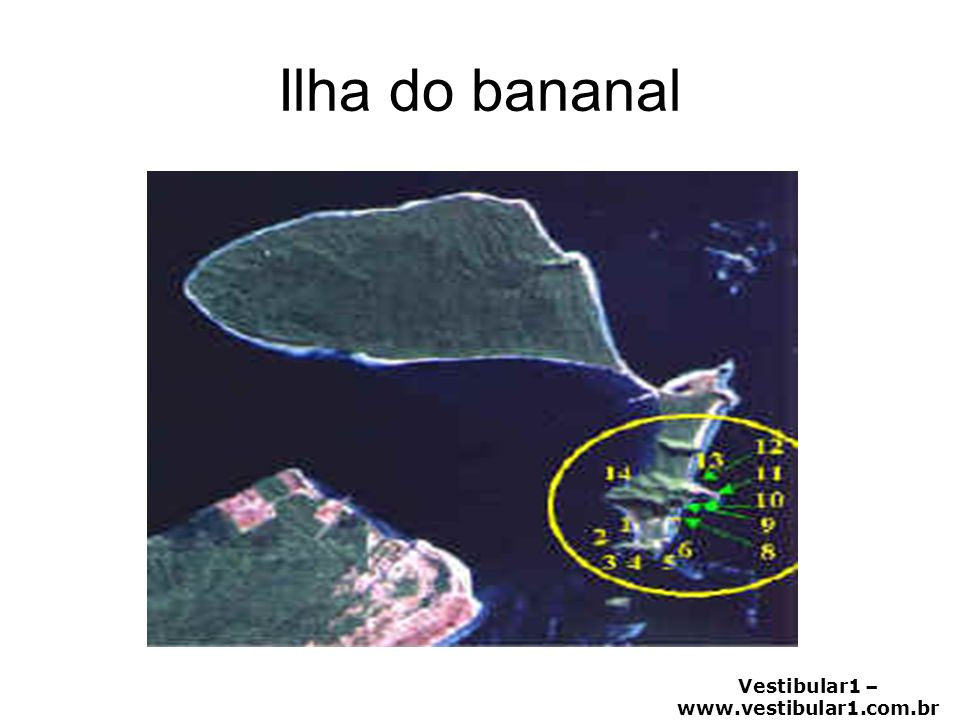 Ilha do bananal