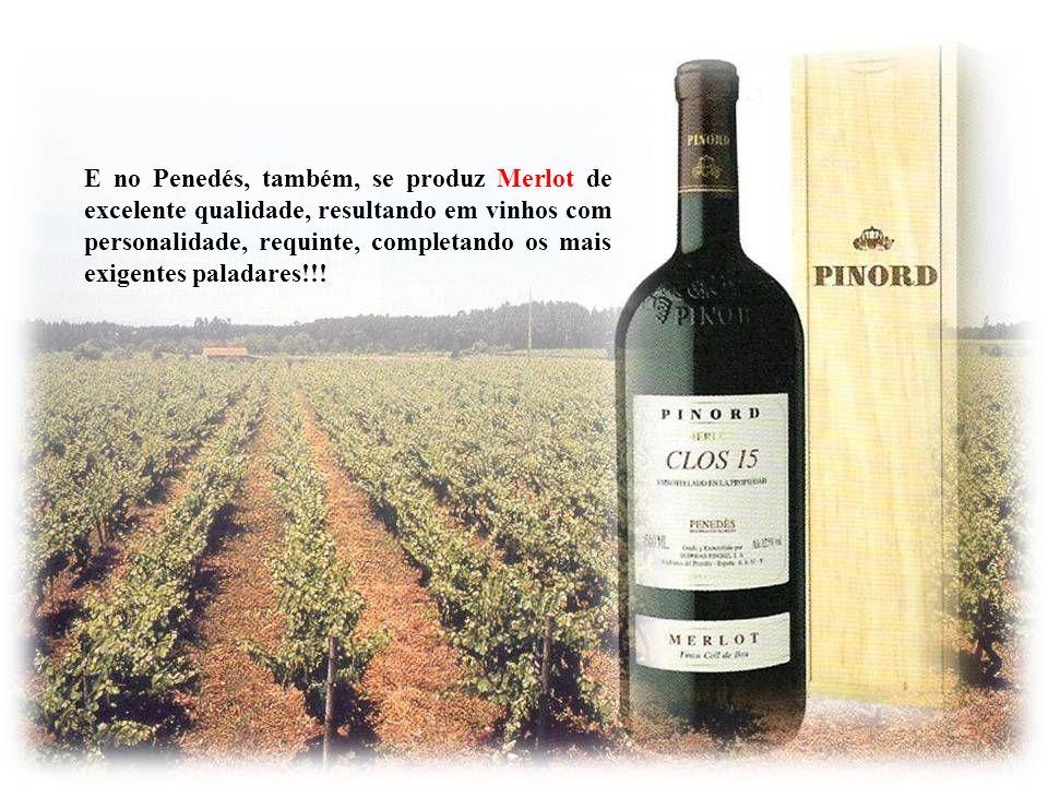 E no Penedés, também, se produz Merlot de excelente qualidade, resultando em vinhos com personalidade, requinte, completando os mais exigentes paladares!!!