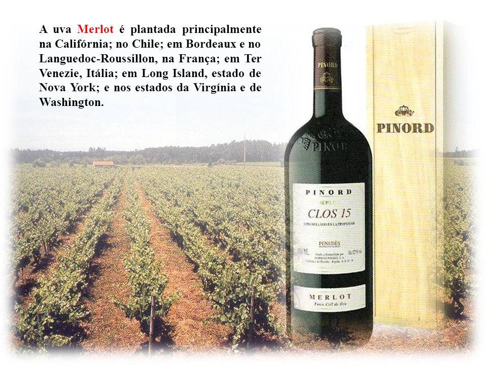 A uva Merlot é plantada principalmente na Califórnia; no Chile; em Bordeaux e no Languedoc-Roussillon, na França; em Ter Venezie, Itália; em Long Island, estado de Nova York; e nos estados da Virgínia e de Washington.
